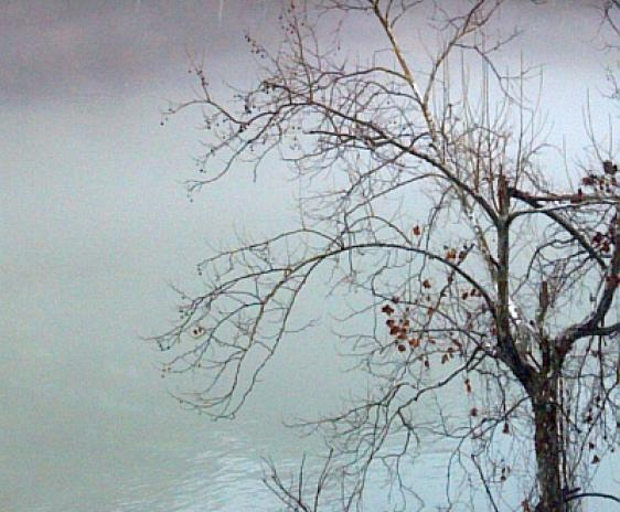 Photo of a tree on a foggy river bank.